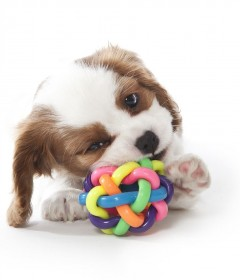 Pet Toys and Equipment